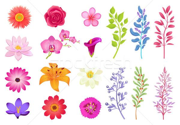 Brillante flores útil hierbas Foto stock © robuart