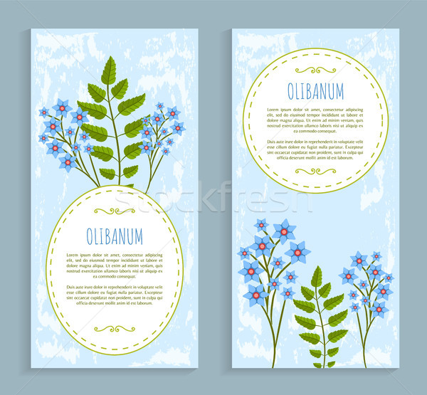 Olibanum Cards Collection Vector Illustration Stock photo © robuart