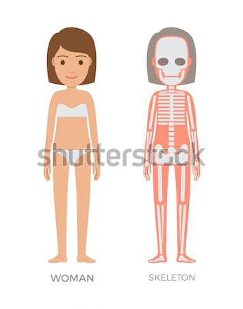 Woman Muscular Skeleton and Blood Systems Struct Stock photo © robuart