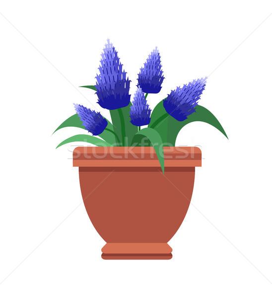 Habitación flor planta flor azul color Foto stock © robuart