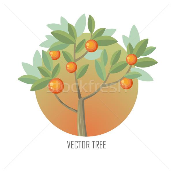 Narancsfa zöld levelek narancsok érett vektor fa Stock fotó © robuart