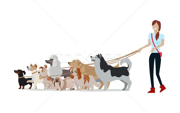 犬 徒歩 バナー 女性 徒歩 異なる ストックフォト © robuart