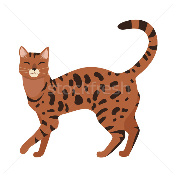 Bengal Cat Vector Flat Design Illustration Stock photo © robuart