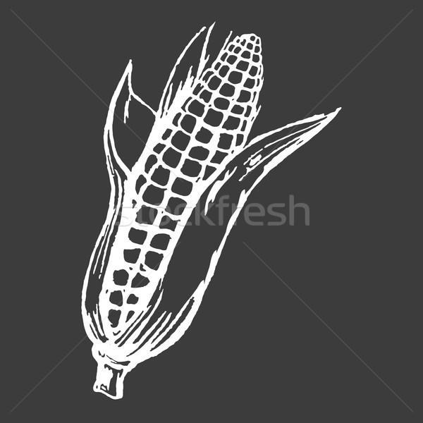 Tasty Ripe Corn Cob Isolated White Silhouette Stock photo © robuart