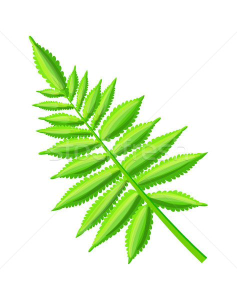 Royal Fern Decorative Leaf Vector Illustration Stock photo © robuart