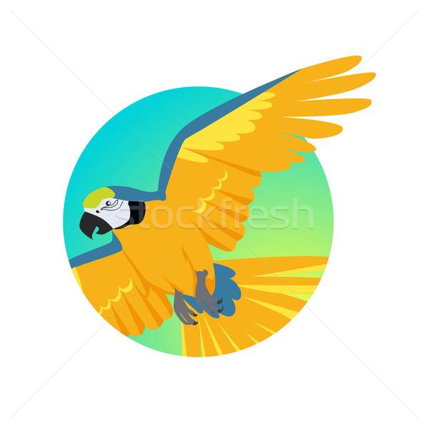 Flying Ara Parrot Flat Design Vector Illustration Stock photo © robuart