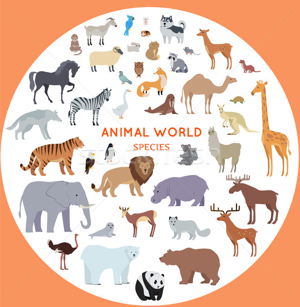 Szett világ állat fajok vektor illusztrációk Stock fotó © robuart