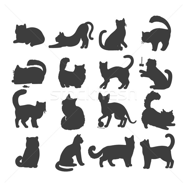 Set of Cats Vector Flat Design Illustration Stock photo © robuart