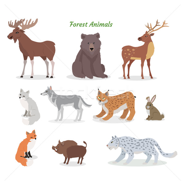 Forest Animals Set. Wildlife Characters. Vector Stock photo © robuart