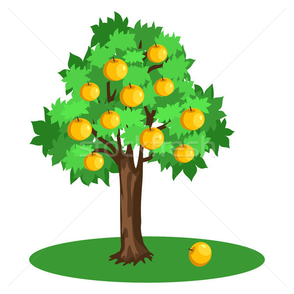 Apple Tree with Green Leaves and Yellow Fruits Stock photo © robuart