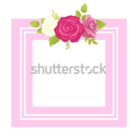 Rózsa fehér rózsaszín lila virág fényképkeret üdvözlet Stock fotó © robuart