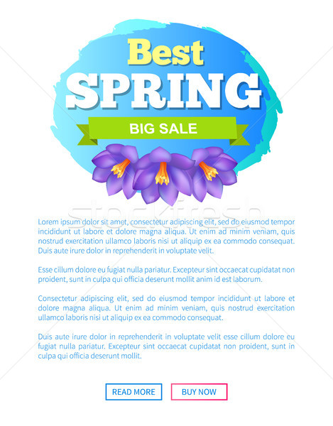 Best Spring Big Sale Advertisement Label Crocus Stock photo © robuart