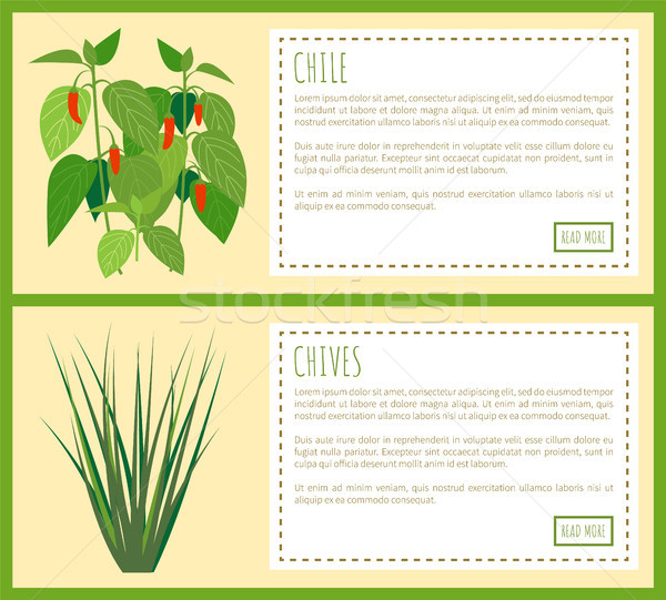 Chile and Chives Herbal Plants Spicy Flavor Food Stock photo © robuart