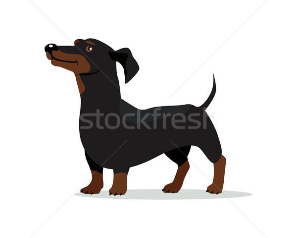 такса собака вектора дизайна иллюстрация барсук Сток-фото © robuart