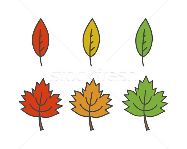 Renkli yaprakları vektör farklı biçim Stok fotoğraf © robuart
