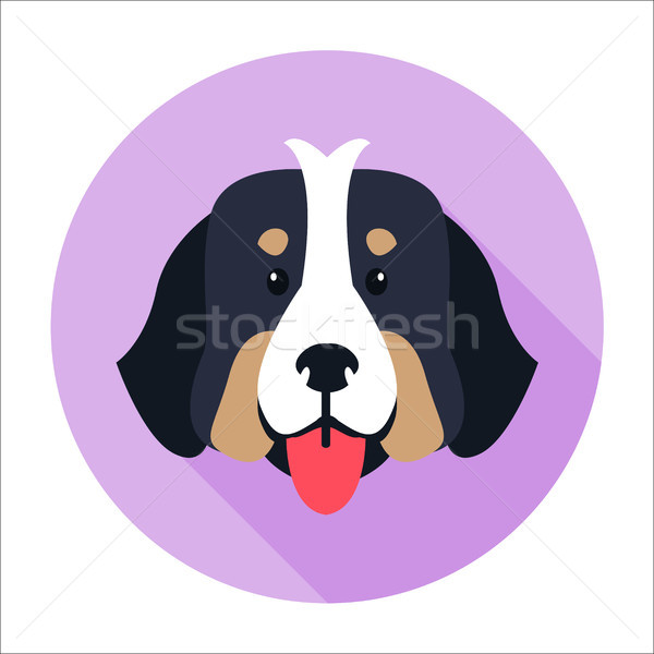 Canine Face of Bernese Mountain Dog Flat Design Stock photo © robuart
