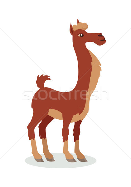 Lama cartoon icon ontwerp cute Stockfoto © robuart
