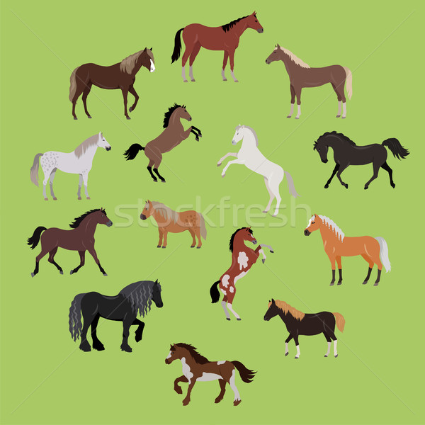 Illustration of Different Breeds of Horses Stock photo © robuart