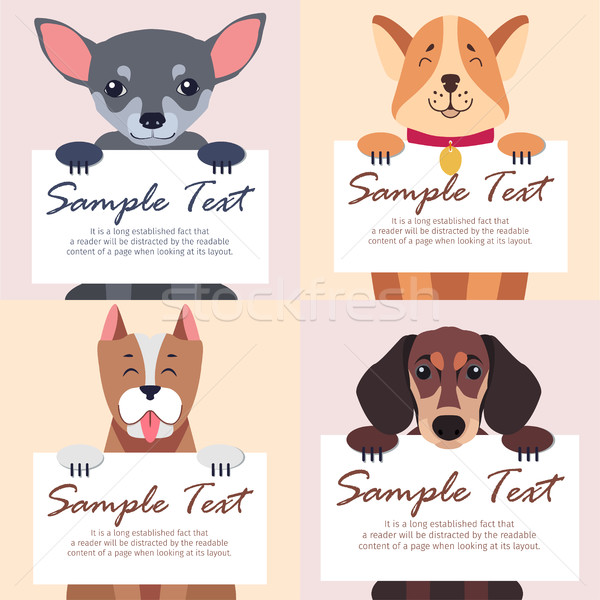 Four Purebred Dogs Holds White Cards for Text Stock photo © robuart