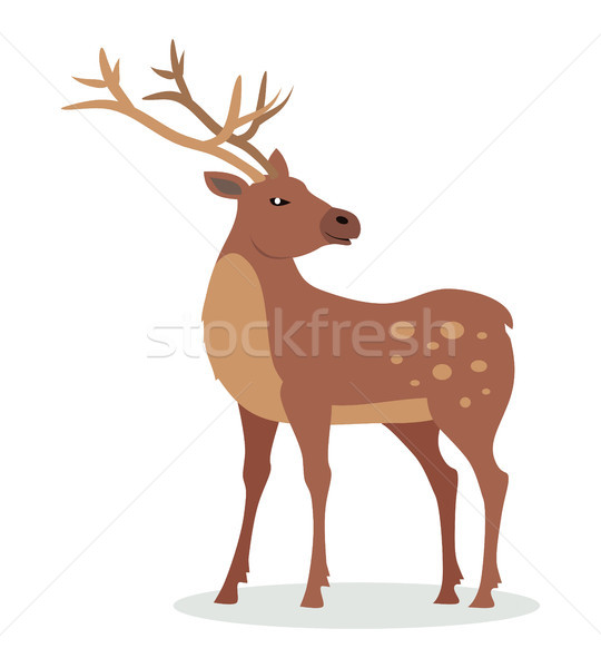 Deer with Horns Vector Illustration in Flat Design Stock photo © robuart