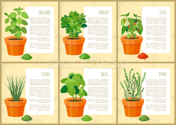 Stock photo: Mint and Parsley Collection Vector Illustration