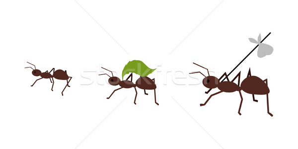 Stock photo: Ant Carrying Her Baggage