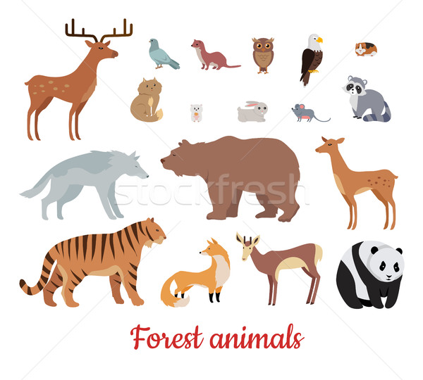 Forest Animals Set Stock photo © robuart