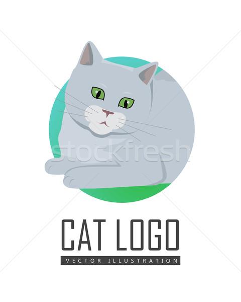 Sevimli gri kedi oynama oyuncak yalıtılmış Stok fotoğraf © robuart