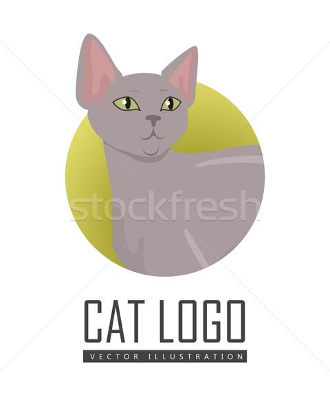 Peterbald cat Vector Flat Design Illustration Stock photo © robuart