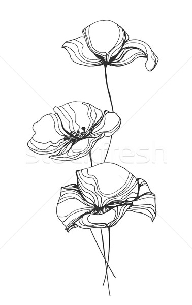 Poppies Flowers Line Art Vector Illustration Stock photo © robuart