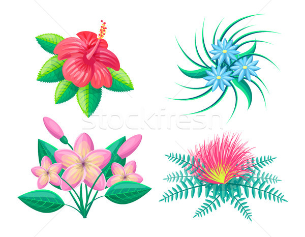 Frangipani Flower Blossom Set Vector Illustration Stock photo © robuart