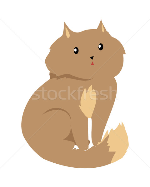 Cat Isolated on White. Domestic, Feral Kitten Stock photo © robuart