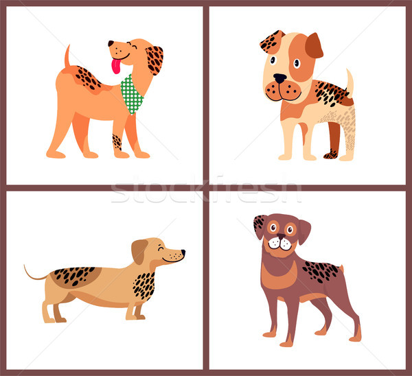 Pedigree Dogs With Unusual Fur Color and Spots Stock photo © robuart