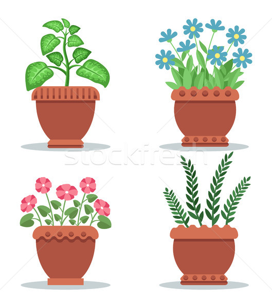 Indoor Foliar Plants and Blooming Flowers Set Stock photo © robuart