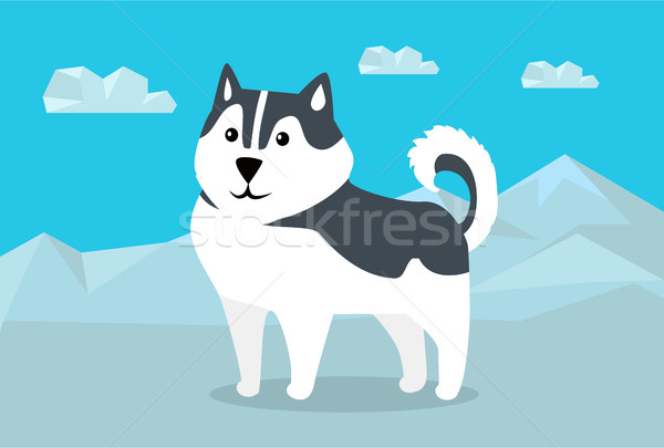 Siberian Husky Vector Illustration in Flat Design Stock photo © robuart
