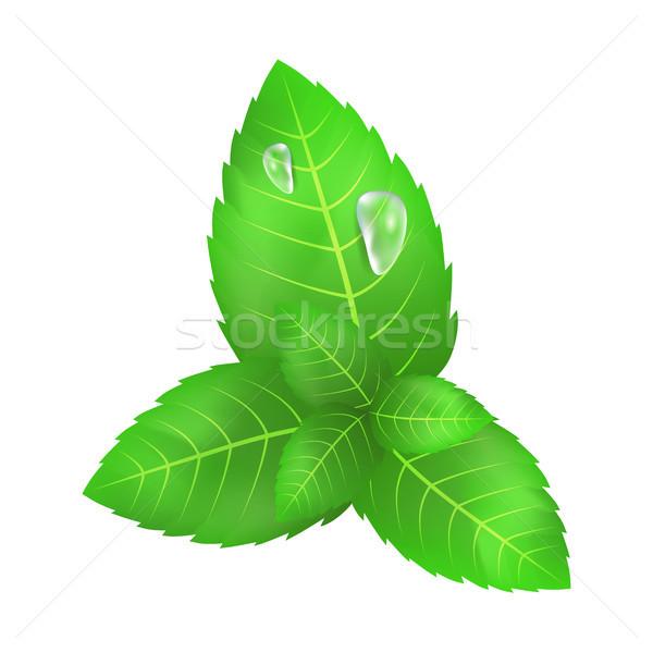 Grüne Blätter mint zwei fließend nach unten Tropfen Stock foto © robuart