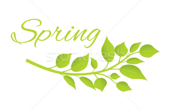 Spring and Tree Branch with Green Leaves on Poster Stock photo © robuart
