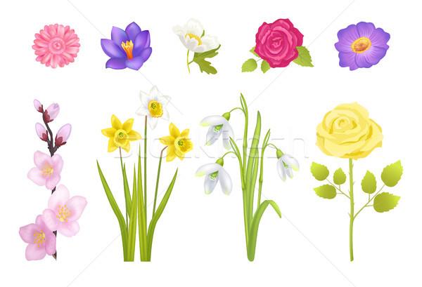 Foto stock: Flores · da · primavera · conjunto · cartaz · rosa · folhas · amarelo