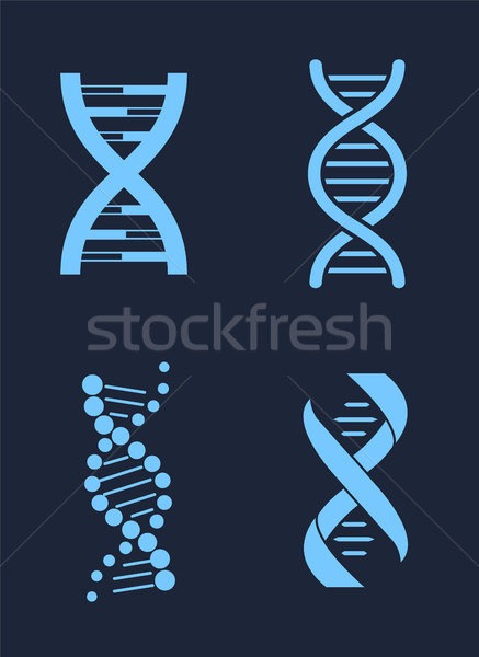 Set of DNA Icon Chains Genetic Personal Codes Stock photo © robuart