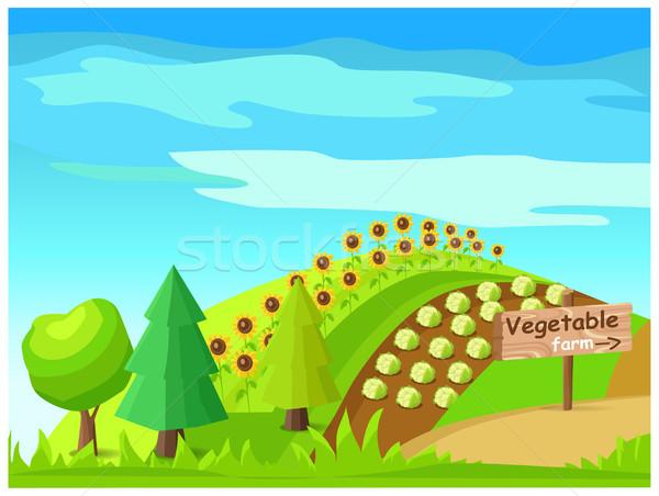 Foto stock: Vegetales · granja · vector · cosecha · campo · idílico