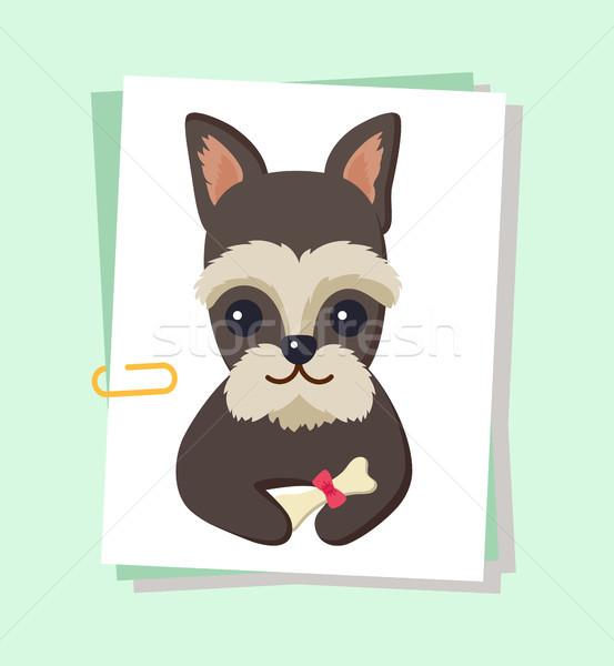 Cão cartaz animal de estimação osso sessão decorado Foto stock © robuart