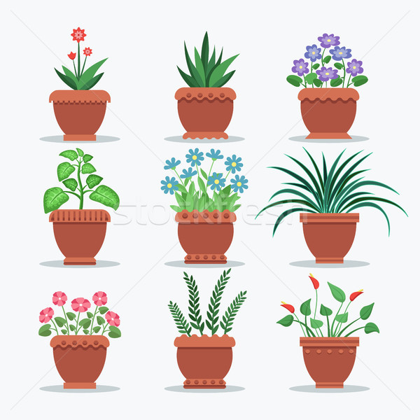 Room Plants Set Flourishing Vector Illustration Stock photo © robuart