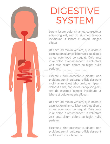 Digestive Female System Color Vector Illustration Stock photo © robuart