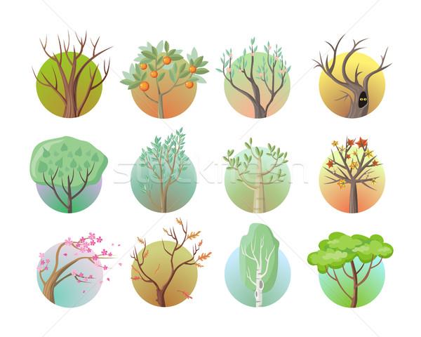 Zestaw drzewo ikona zielone liście klon Zdjęcia stock © robuart
