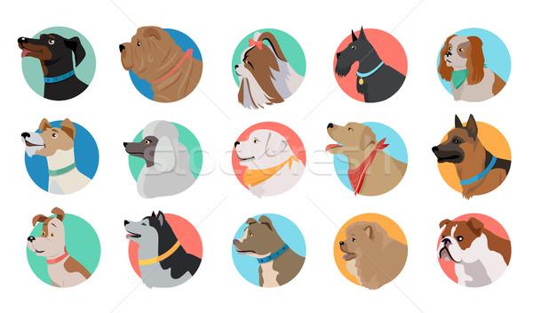 Set of Dog Round Icons Stock photo © robuart