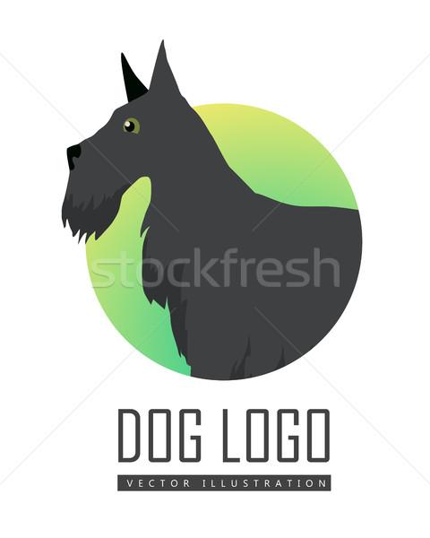 Terriyer köpek logo beyaz siyah ikon Stok fotoğraf © robuart