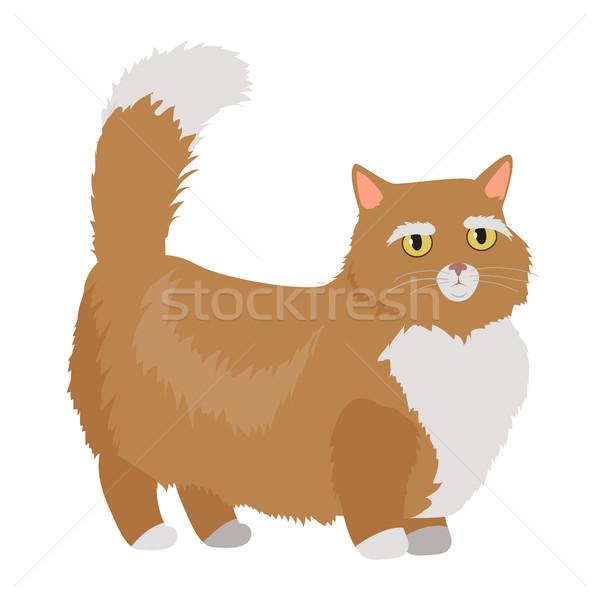 Munchkin cat Vector Flat Design Illustration Stock photo © robuart