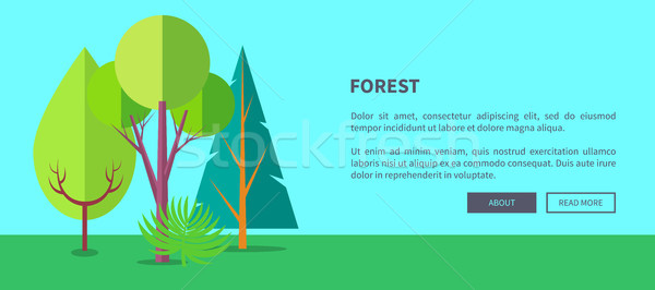 Forest Vector Web Banner with Trees and Bushes Stock photo © robuart