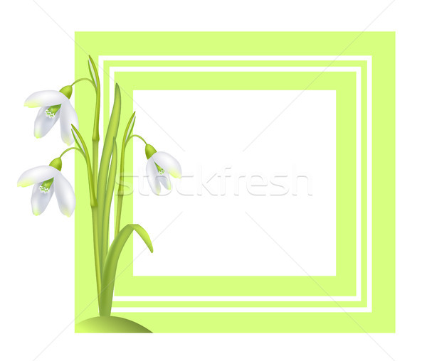 Greeting Card with Framing Snowdrop Galanthus Bell Stock photo © robuart