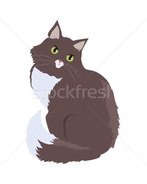 Siberian Cat Vector Flat Design Illustration Stock photo © robuart